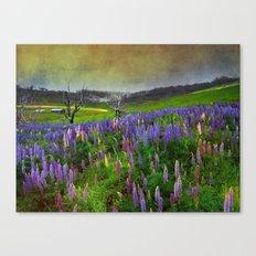 Lupens Canvas Print