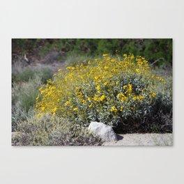 Brittle Bush At ... Wildlife Preserve Canvas Print