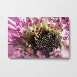 The Seeds Metal Print