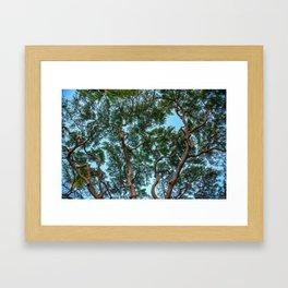 monkey pod tree Framed Art Print
