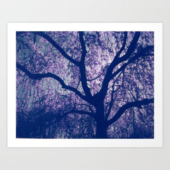 Cherry Blossom Blue Art Print