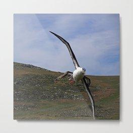 Albatross Soaring Metal Print