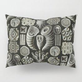 Ernst Haeckel - Tetracoralla (Corals) Pillow Sham