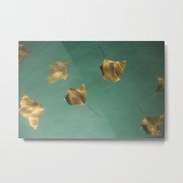 Sting rays | Fine art print Metal Print
