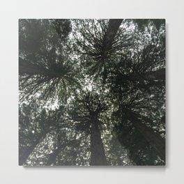 Redwood Canopy in Muir Woods, nature Metal Print