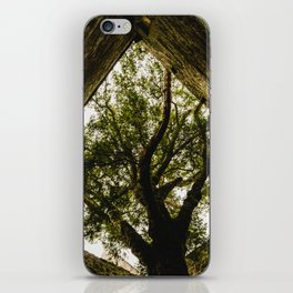 Under the Yew iPhone Skin