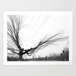 Between the lines: Nature vrs Human Art Print