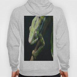 Green Chameleon Hoody