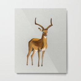 Money antelope Metal Print
