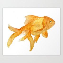 Curious Goldfish Art Print