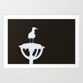 Sea Gull III Art Print