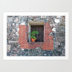 Plant on a Windowsill  Art Print