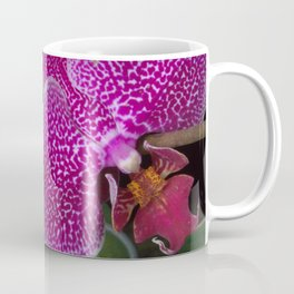 Orchid Phalaenopsis Coffee Mug