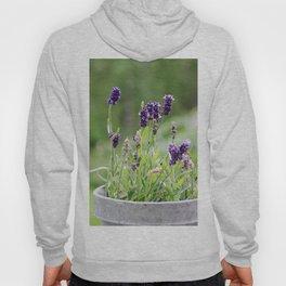 Lavender flower in tin pot Hoody