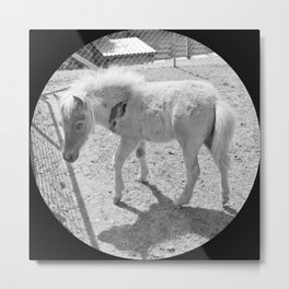 Cute young miniature horse Metal Print