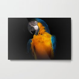 Feathered 8 Metal Print