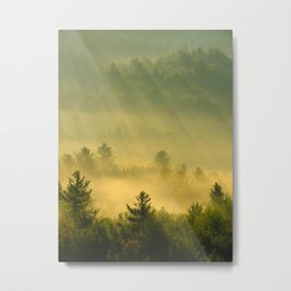 golden fog forest II Metal Print