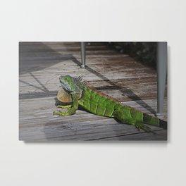 Cayman Iguana I Metal Print