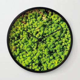 Succulent carpet Wall Clock