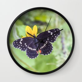 Bordered Patch Butterfly by Murray Bolesta Wall Clock