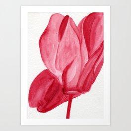 Cyclamen In Red Art Print