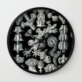 Ernst Haeckel - Gorgonida Wall Clock