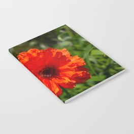 the first poppy Notebook