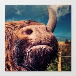 Yak Cow Snout Love Canvas Print