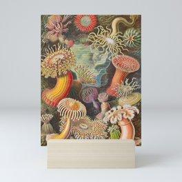 Ernst Haeckel Sea Anemones Vintage Illustration Mini Art Print