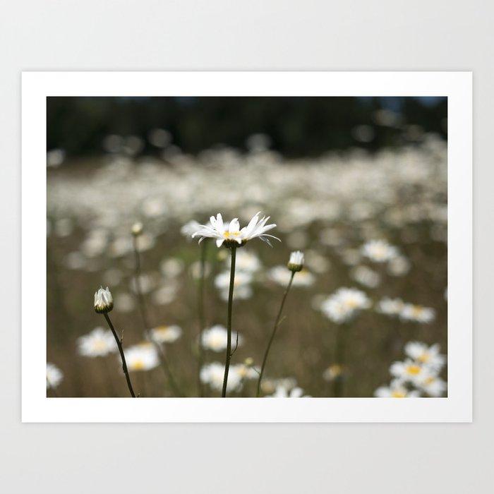 Wildflowers in an Oregon Field Art Print