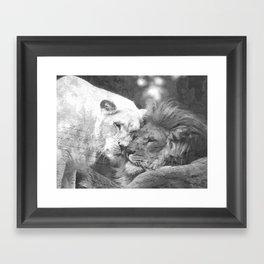 Lion in Love Framed Art Print
