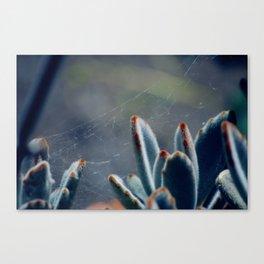 Spiders & Succulents Canvas Print