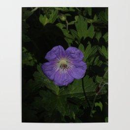 Purple Pentagon Poster
