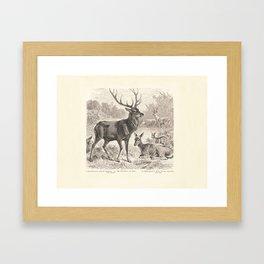 Antique Deer Scene in Nature Framed Art Print