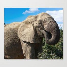 african elphant Canvas Print