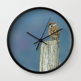 Passerotto-young sparrow Wall Clock