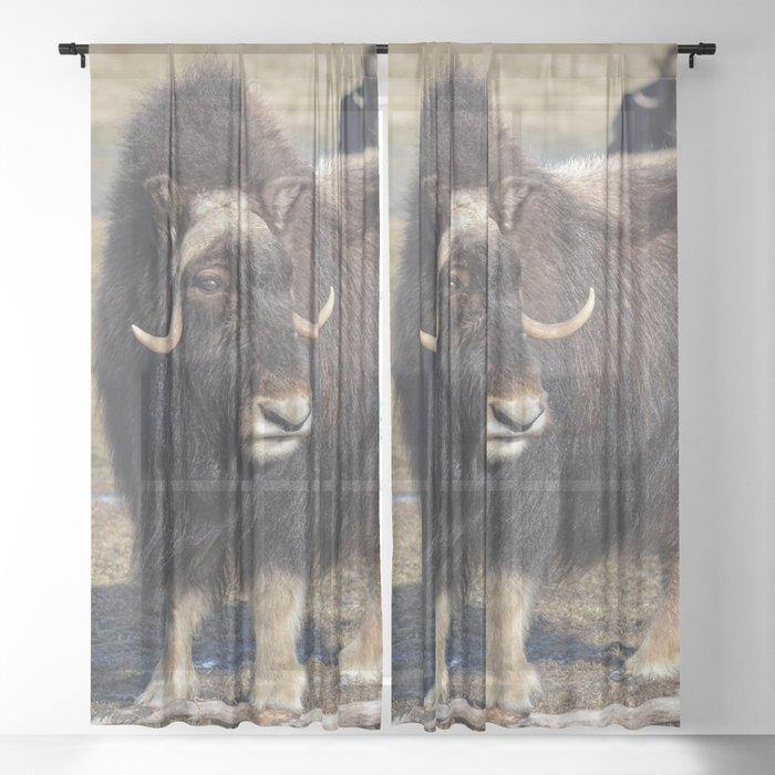 Arctic Muskox Sheer Curtain