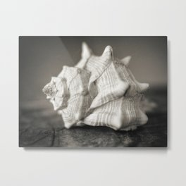Seashell in black and white Metal Print