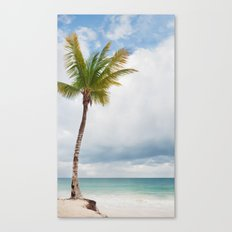 Mexico Palm  Canvas Print