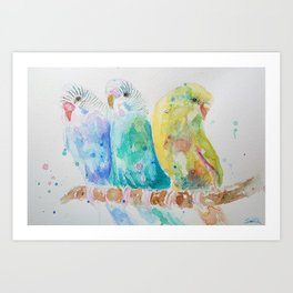 Three Budgies Sitting On a Branch Art Print