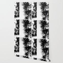 Mediterranean black and white pine tree Wallpaper