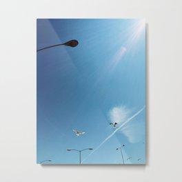 Birds flying by. Metal Print