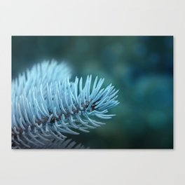 Blue spruce 2 Canvas Print