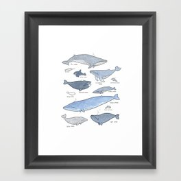 Whales Dolphins & Porpoises Framed Art Print