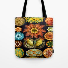 Sea Squirts (Ascidiacea) by Ernst Haeckel Tote Bag