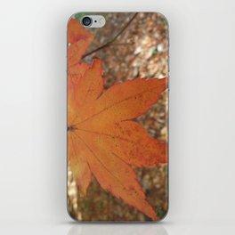 Maple iPhone Skin