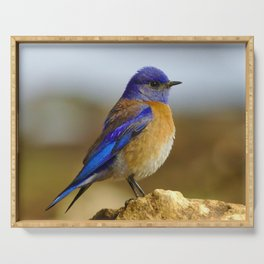 Blue Bird Perched on a Rock - Nature Photography Serving Tray
