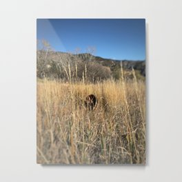 Abandoned wheel - Red Mountain, Glenwood Springs, CO Metal Print