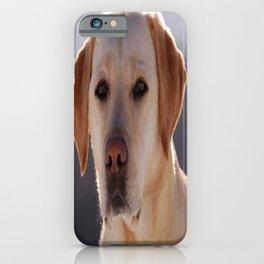 Portrait of A Golden Labrador Retriever iPhone Case