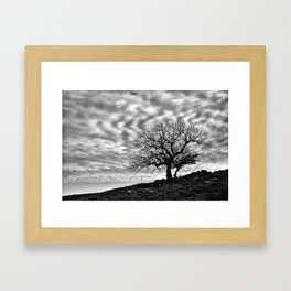 Lonely Tree with a mottled sky Framed Art Print